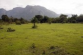 Landscape in Mudumalai National Park, India