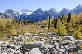 Canada, Alberta, Banff, Forest and mountains in Banff National Park