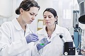 Female scientists analyzing sample in laboratory