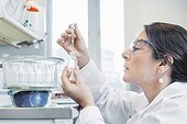 Side view of female scientist analyzing chemical in laboratory