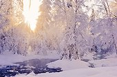 Small stream in a hoarfrost covered forest with rays of sun filtering through the fog in the background, Russian Jack Springs Park, Anchorage, Southcentral Alaska. Digitally enhanced.