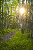 The sun setting behind trees and over a path in Bicentennial Park in Anchorage, Southcentral Alaska, Summer