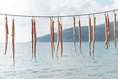 Mani, Peloponnese, Greece.. Octopus tentacles hanging to dry on the Mani peninsula in the Peloponnese in Greece.