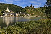 View of the picturesque village on the Mosel river dominated by the ruins of the Burg Metternich castle (Moselle Valley, Central Europe, Mosel river, Beilstein, Beilstein, Germany, Deutschland)